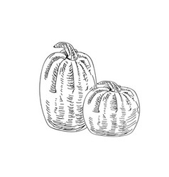 Hand drawn ink pumkins for your design vector