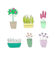 Pot plants with flowers and leaves vector