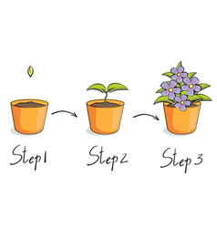Steps growing vector