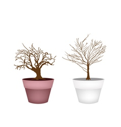 Two Abstract Isometric Brown Trees in Flower Pot vector