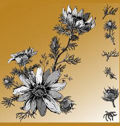 adonis flower arrangement with goldish background vector image