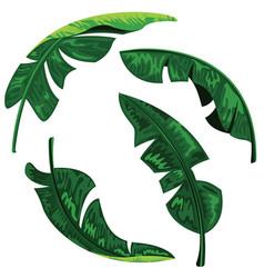 banana leaves collection set design vector image