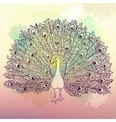 Beautiful Hand drawn Peacock bird vector