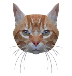 Cat portrait vector image