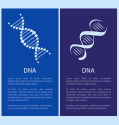 dna set white spirals isolated on blue backdrop vector image