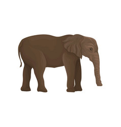 Elephant wild animal side view vector