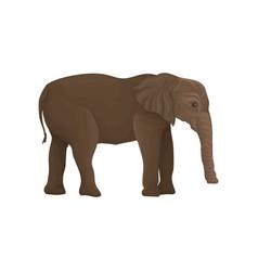 elephant wild animal side view vector image