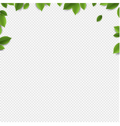 Green leaves frame isolated transparent background vector