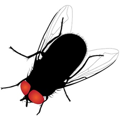 House fly silhouette on white background vector image