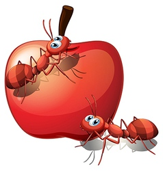 An apple with ants vector