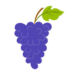 Grapes with leaf and wooden stick vineyard vector