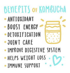 health benefits of kombucha vector image