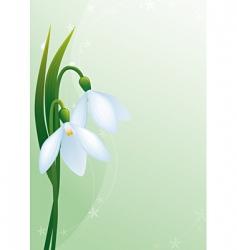 Snowdrops vector