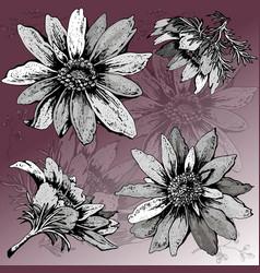 vintage floral set of adonis and colorful backgrou vector image