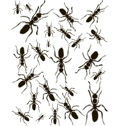 Set Ants Silhouette vector image vector image
