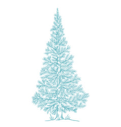 Christmas blue tree conifer fluffy spruce new vector