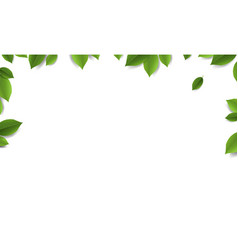 Green leaves frame with white background vector