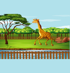 scene with giraffe at zoo vector image