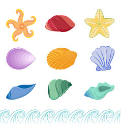 Set of colorful seashells and starfishes vector