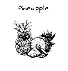 hand drawn vintage isolated pineapple vector image vector image
