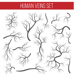 Creative of red veins isolated vector