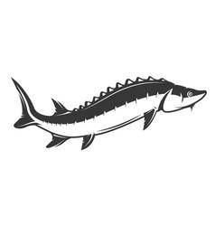 Fresh seafood sturgeon icon on white background vector