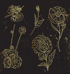 collection of gold hand drawn peony and vector image