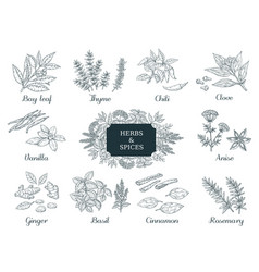 Hand drawn spices indian food herbs and vector