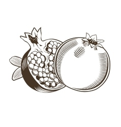 Pomegranates in vintage style Line art vector image