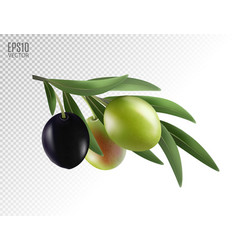 realistic olives branch vector image