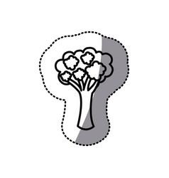 figure vegetable broccoli icon vector image vector image