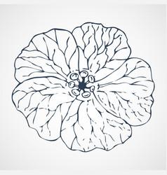 geranium hand drawn vector image