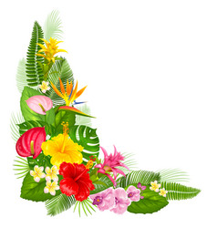 tropical corner design vector image