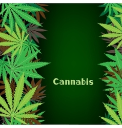 cannabis hemp background vector image