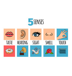 Five senses vector