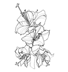 hibiscus pen drawing vector image vector image