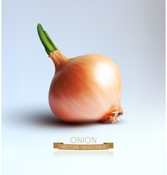 onion bulb isolated on gray background vector image vector image