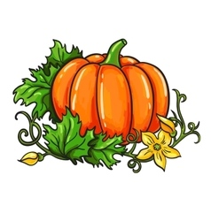 Pumpkin drawing Isolated cartoon vegetable vector image