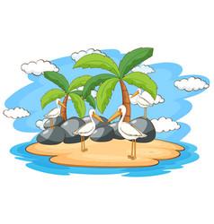 scene with pelican birds on island vector image