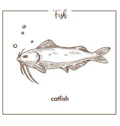 Catfish sketch fish icon of sheatfish vector