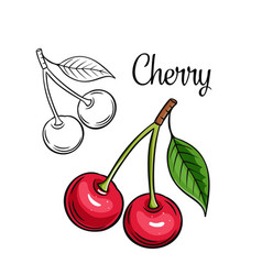 Cherry drawing icon vector
