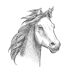 Lively little horse of arabian breed sketch style vector