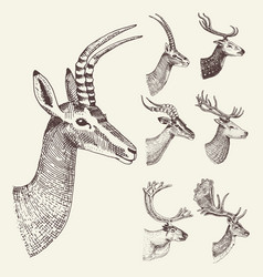 set of horn antlers animals moose or elk with vector image