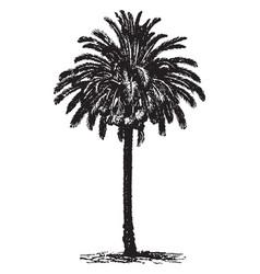 Date palm vintage vector