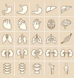 internal human organs yellow vector image