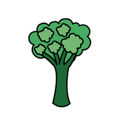 colorful vegetable broccoli icon vector image vector image