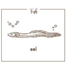 eel sketch fish icon or conger vector image vector image