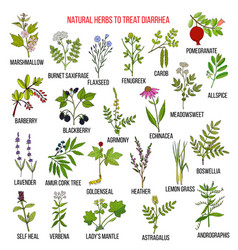 best medicinal herbs to treat diarrhea vector image
