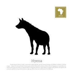 black hyena silhouette on a white background vector image