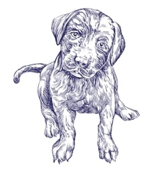 dog puppy hand drawn llustration realistic vector image